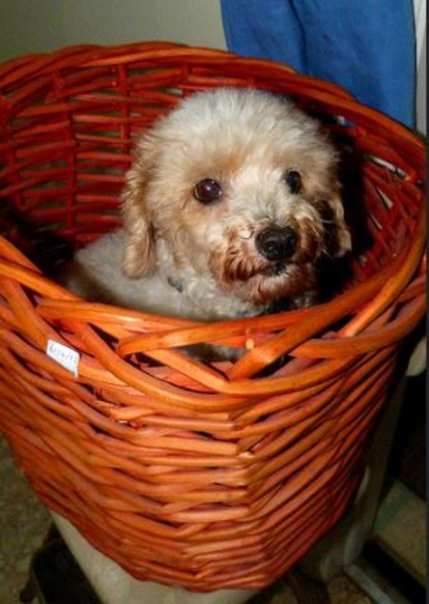 dog wastebasket