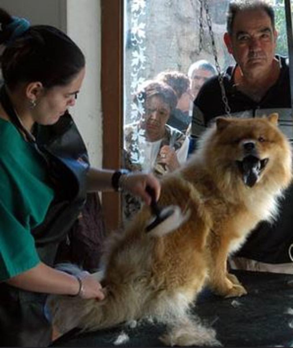 dog-stressed-at-dog-groomer