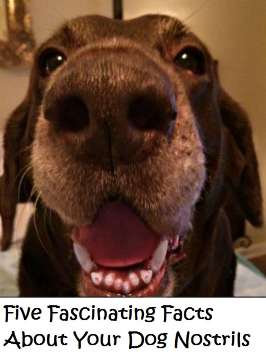 facts about dog nostrils