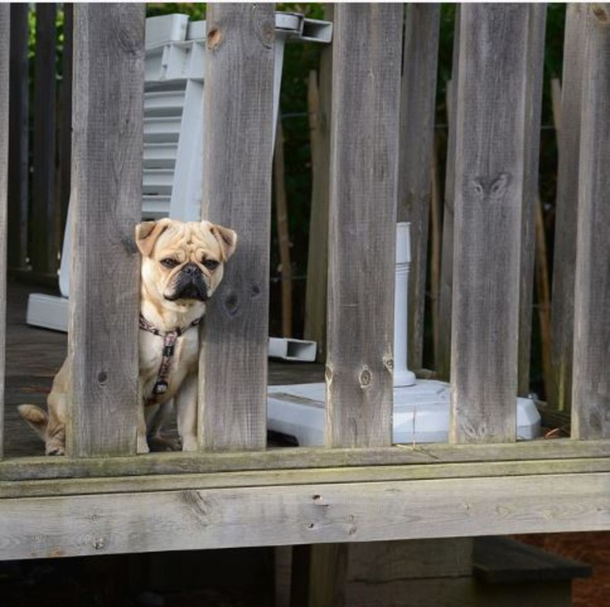 Is your dog a porch sitter?