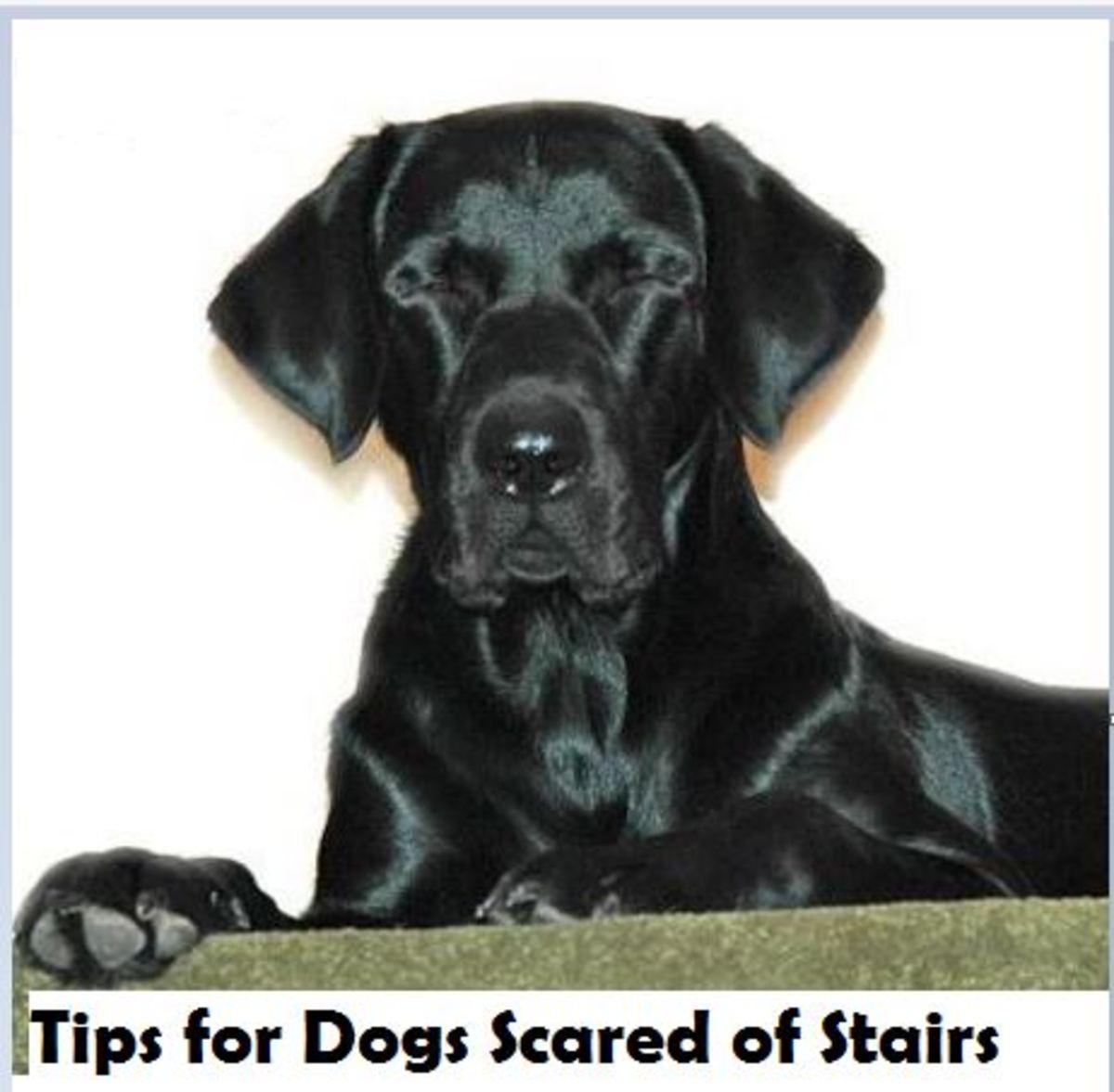 dog-stairs