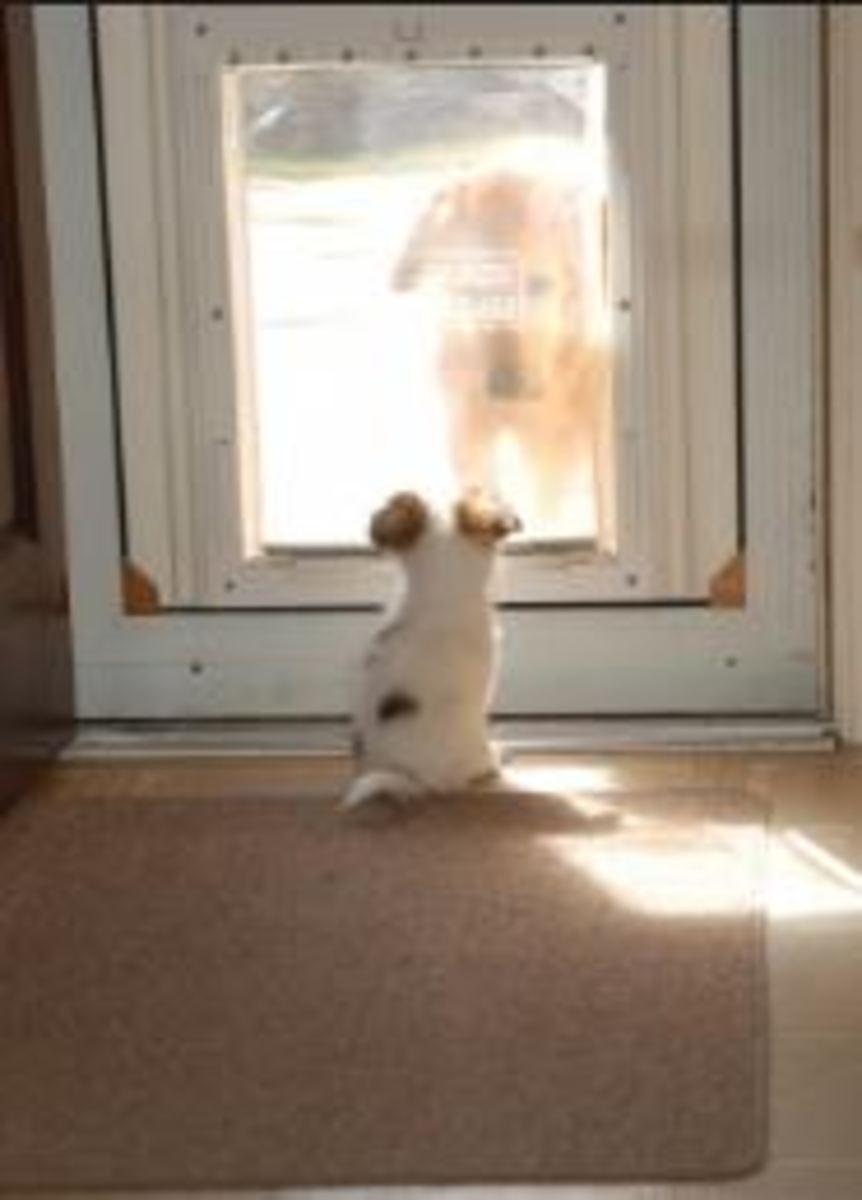 dog door measurement
