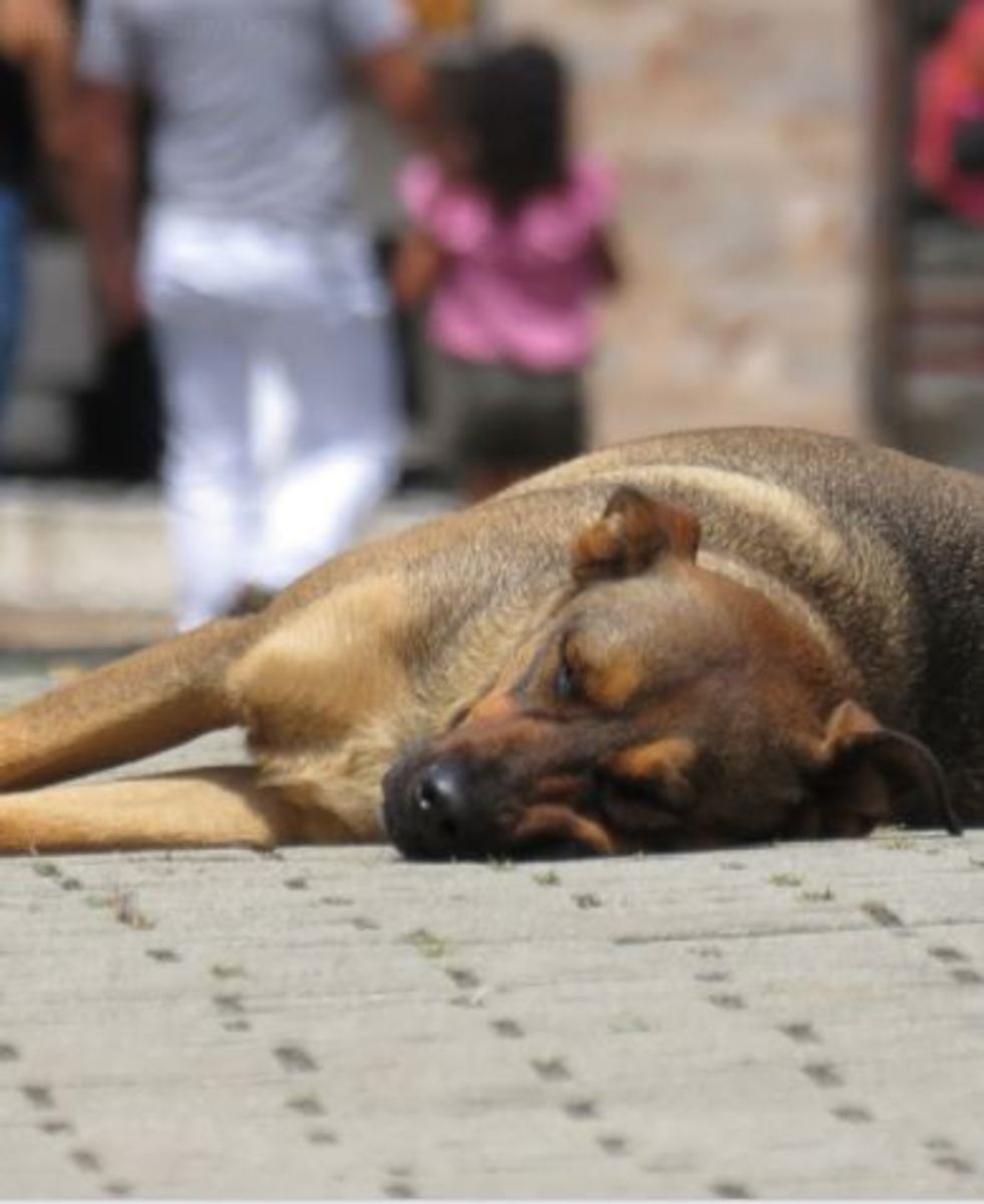 Ever wondered how stray dogs get to relax in the midst of the hustle and bustle of the city?
