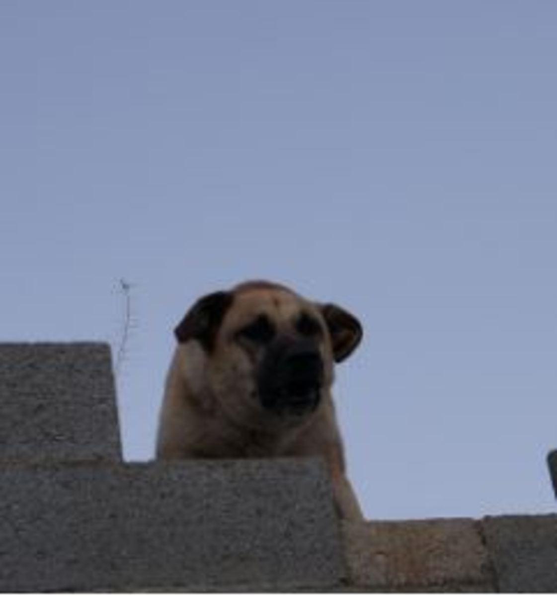 approach-avoidance-in-dog