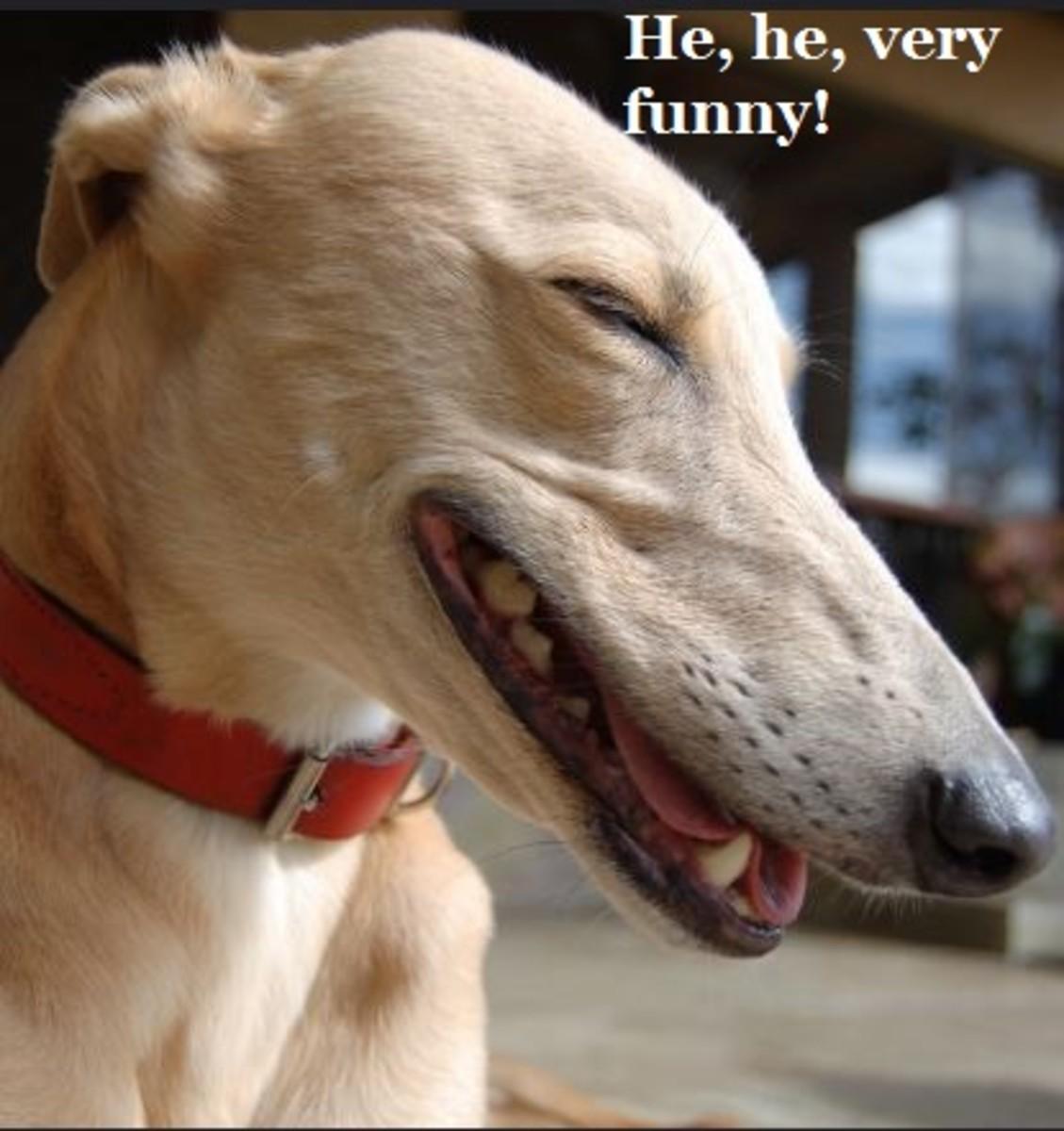 DOG LAUGHING 2