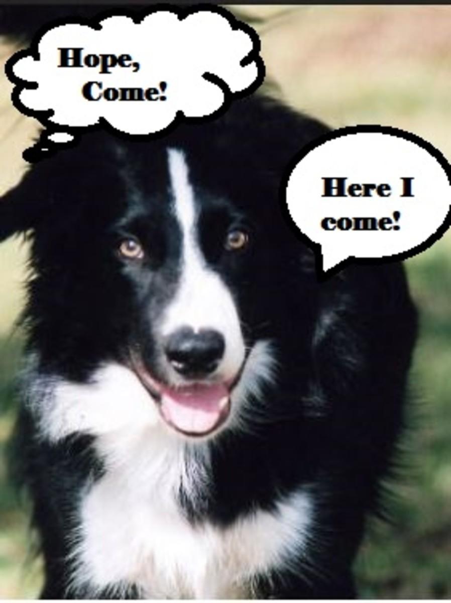 hope dog name