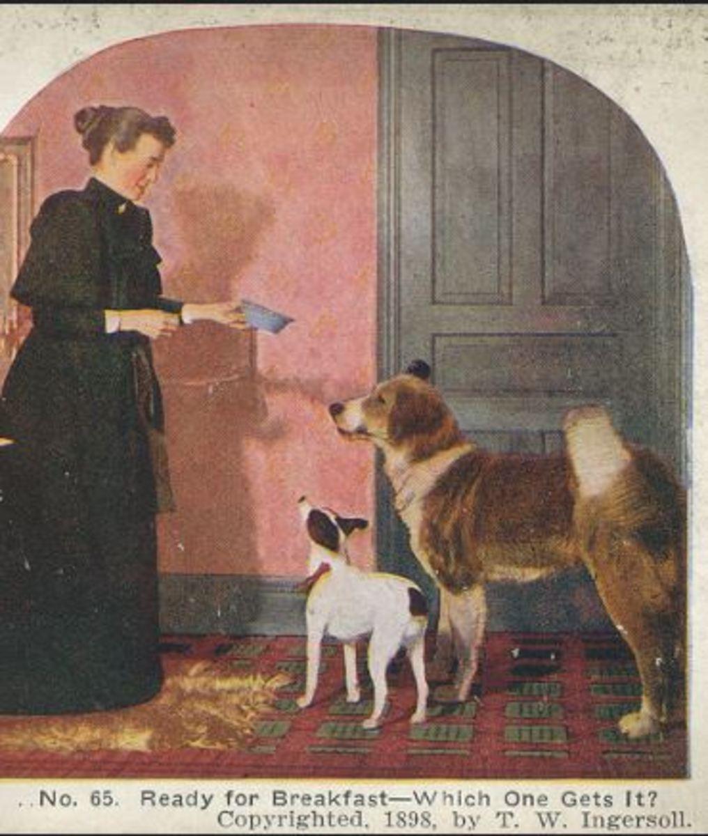 feeding-the-dogs