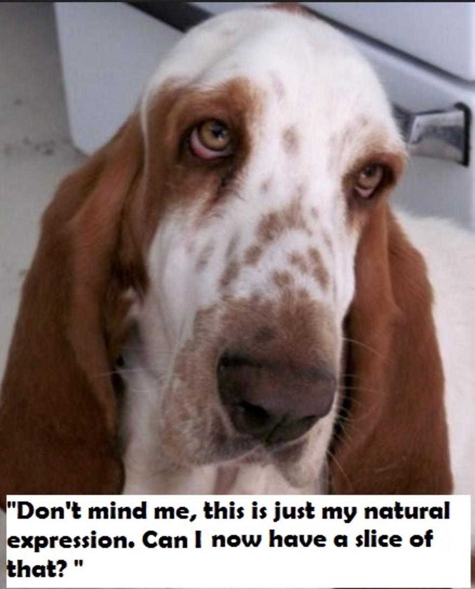 hound-sad-expression