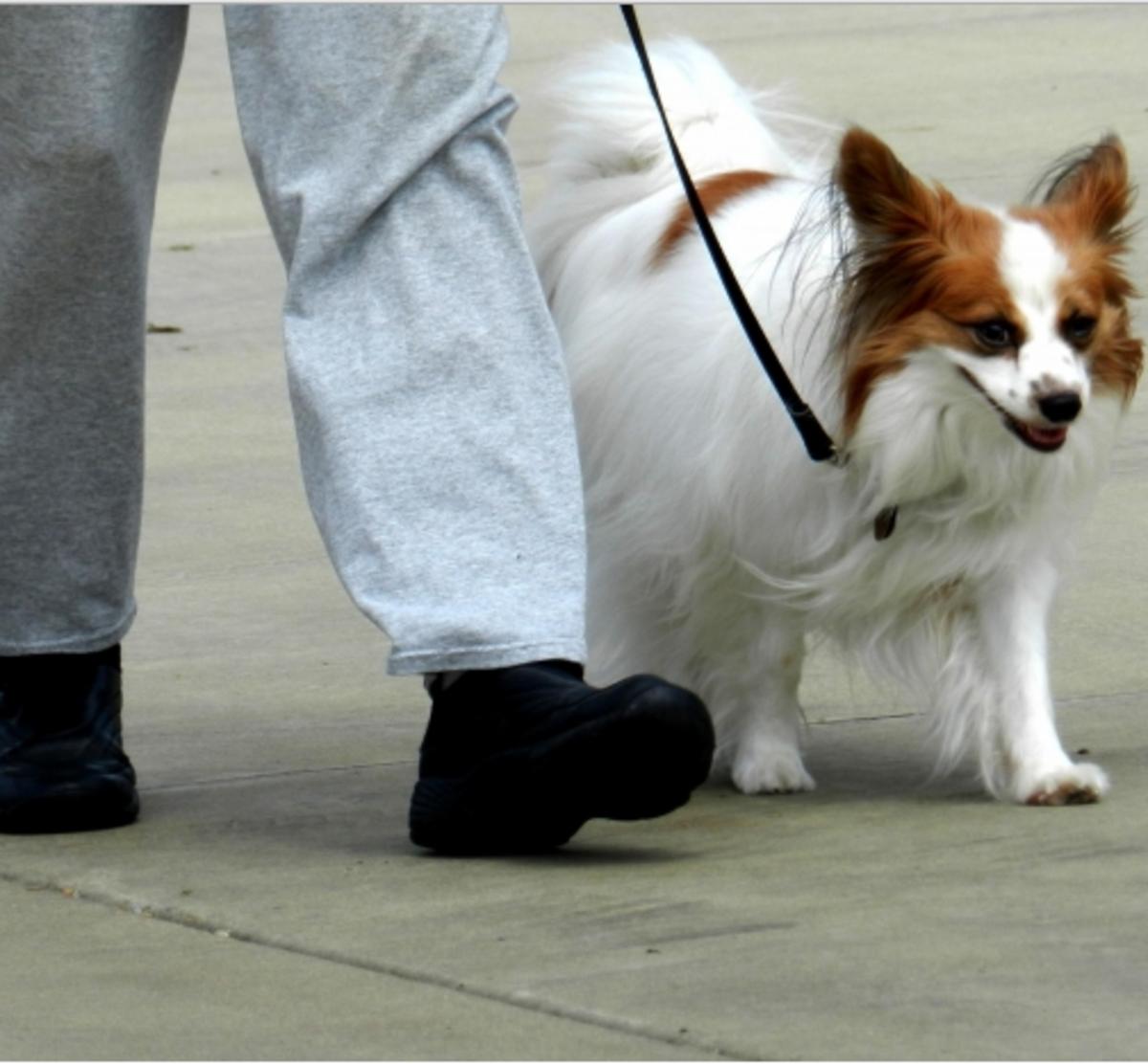 loose leash