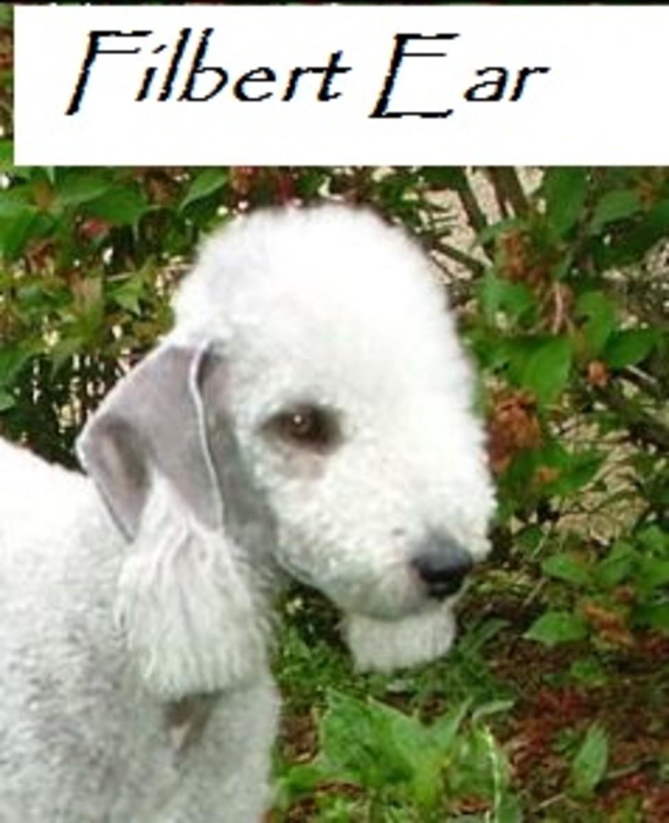 filbert ear