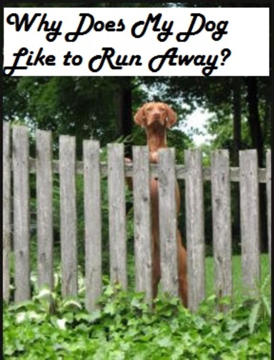 dog fence