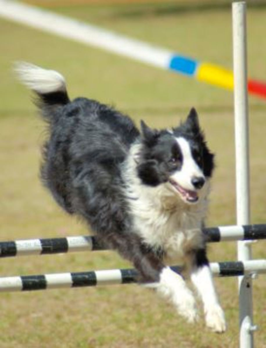 Too young for agility?