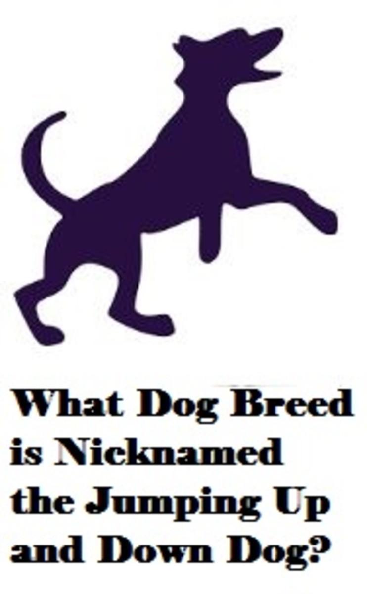dog breed nickname
