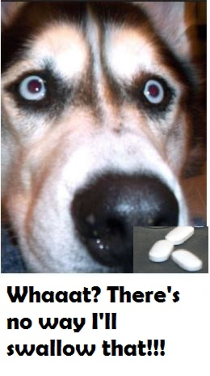 dog-wont-eat-pill