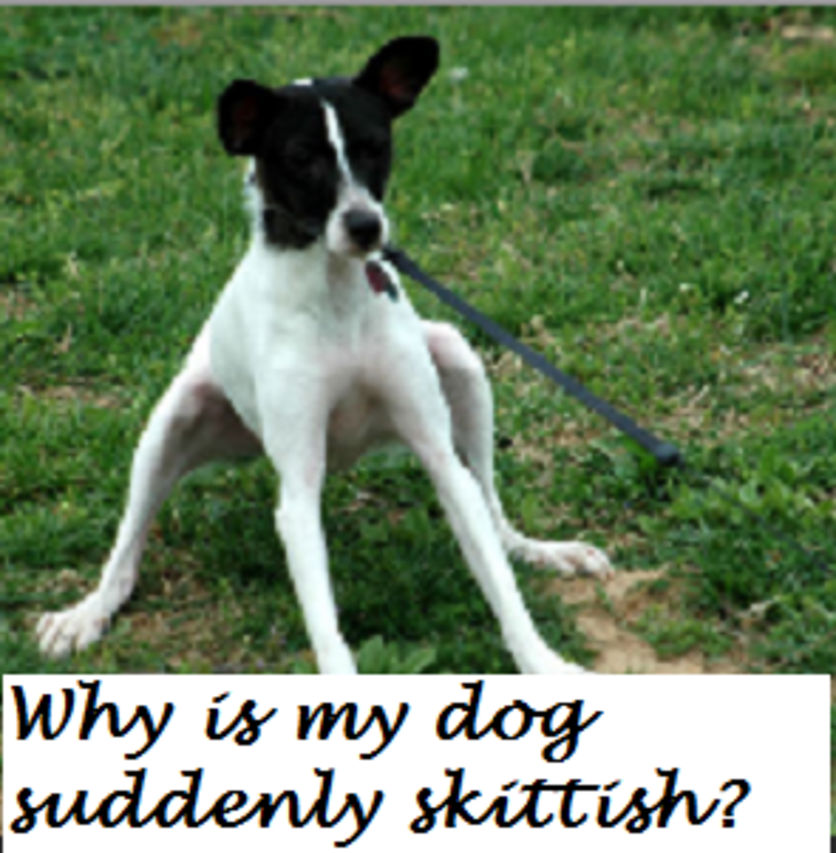 skittish puppy