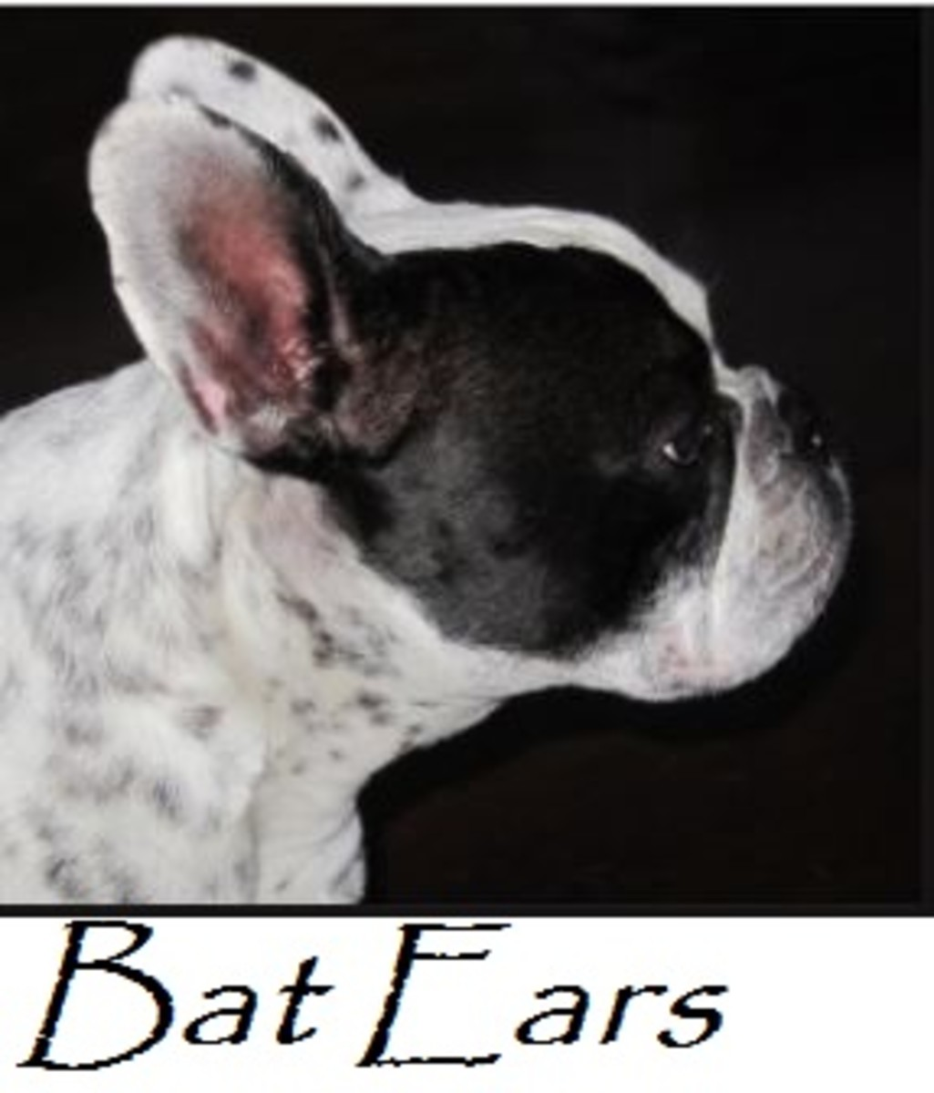 bat ears