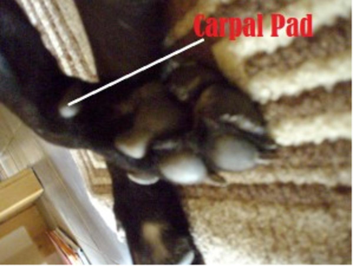 carpal pad