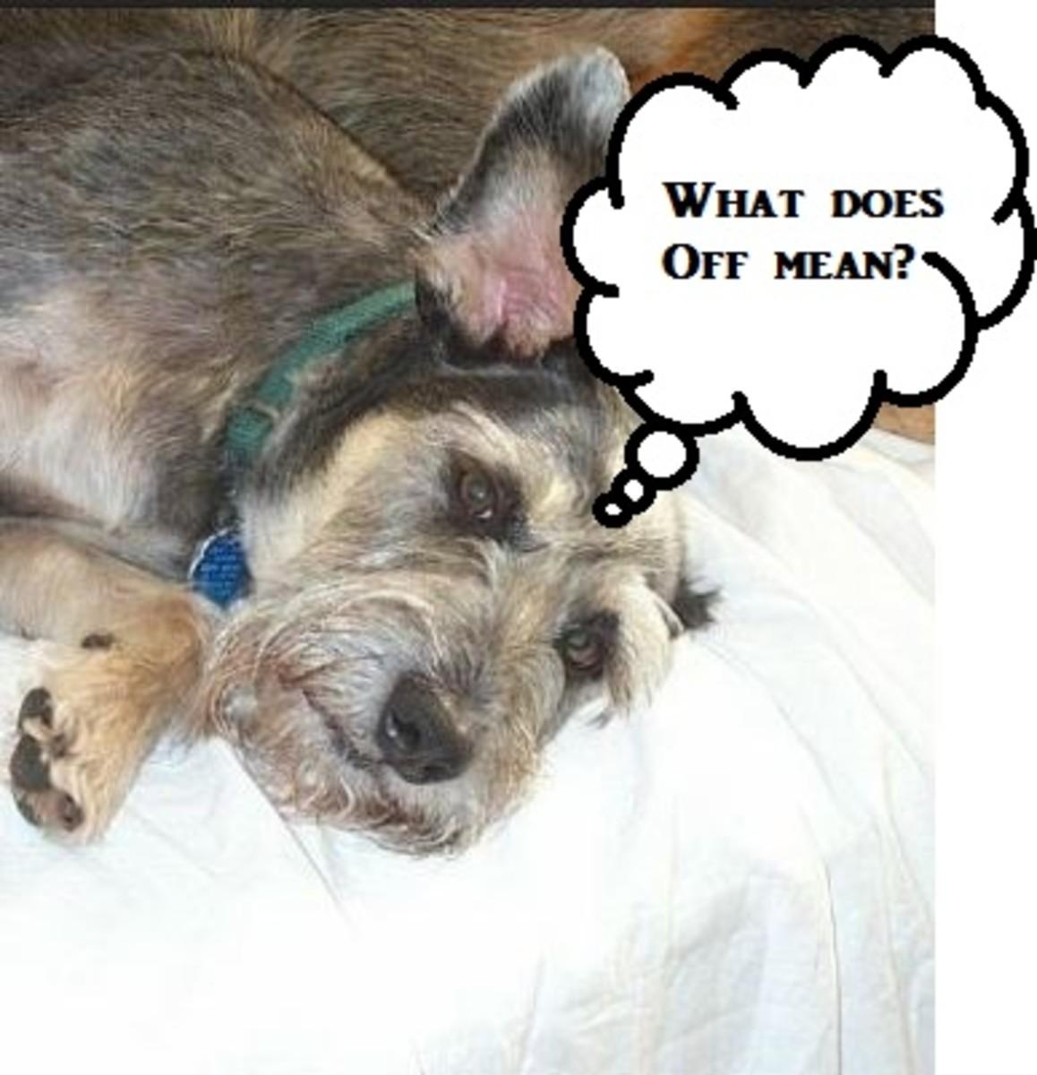 dog-on-beds