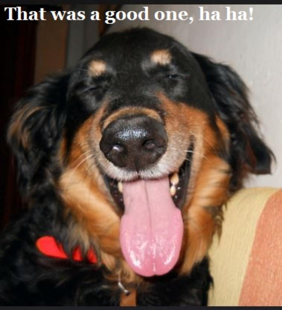 DOG laughing 4