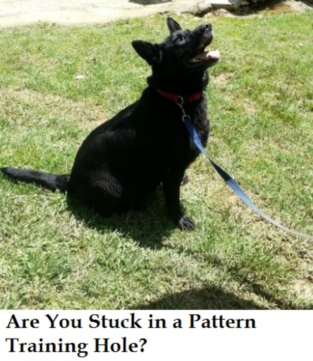 pattern training dog