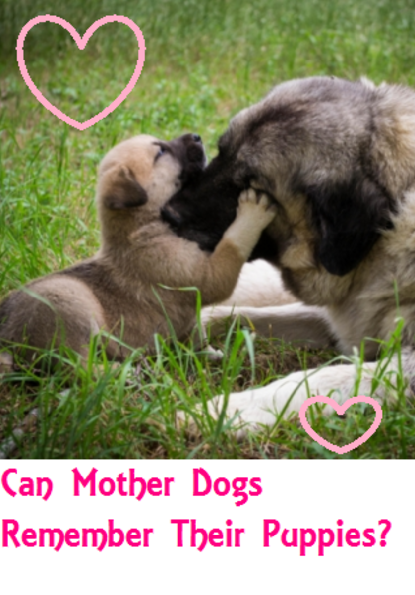 mother dog
