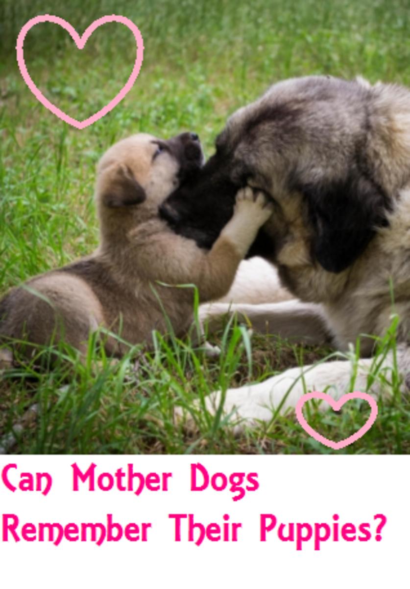 mother dog