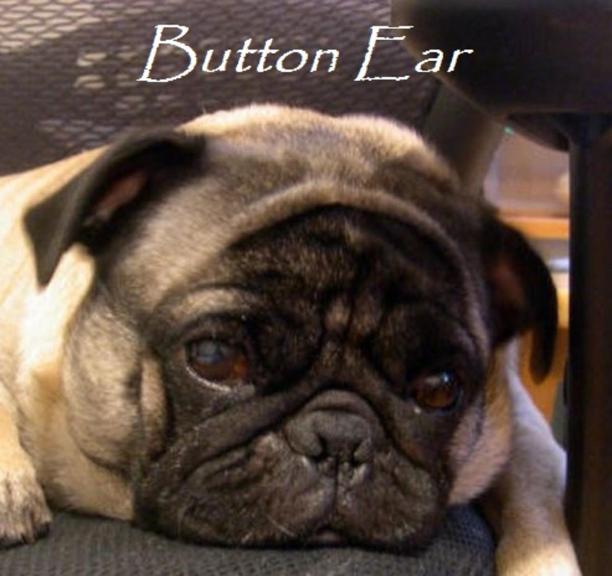 button ear