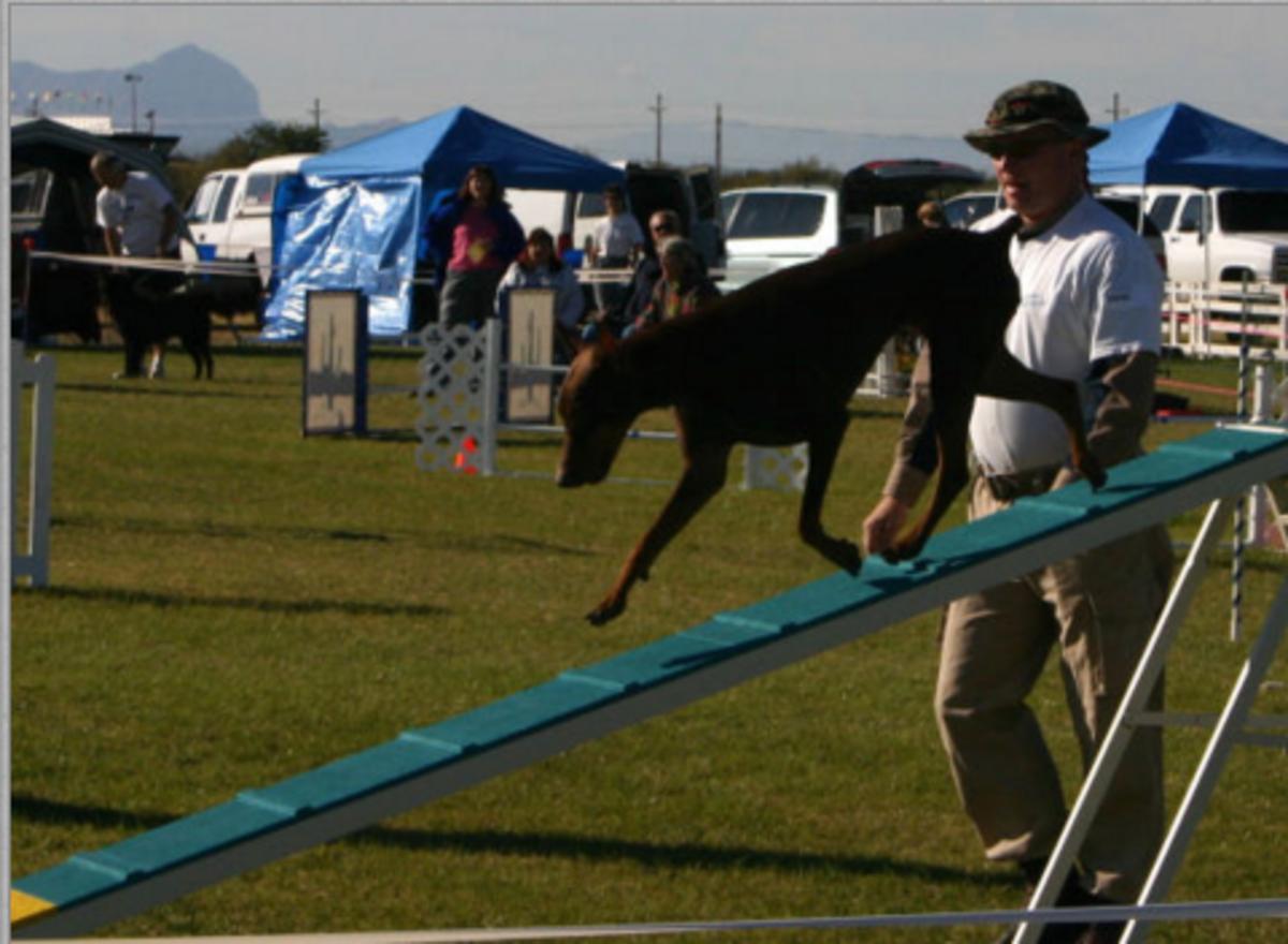dog agility equipment colors
