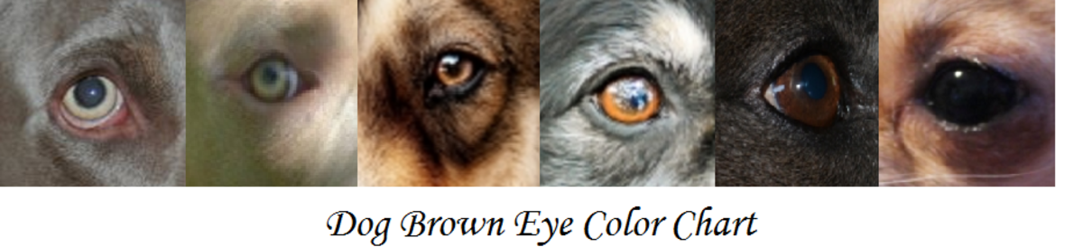 Yellow Bird Of Prey Eyes In Dogs