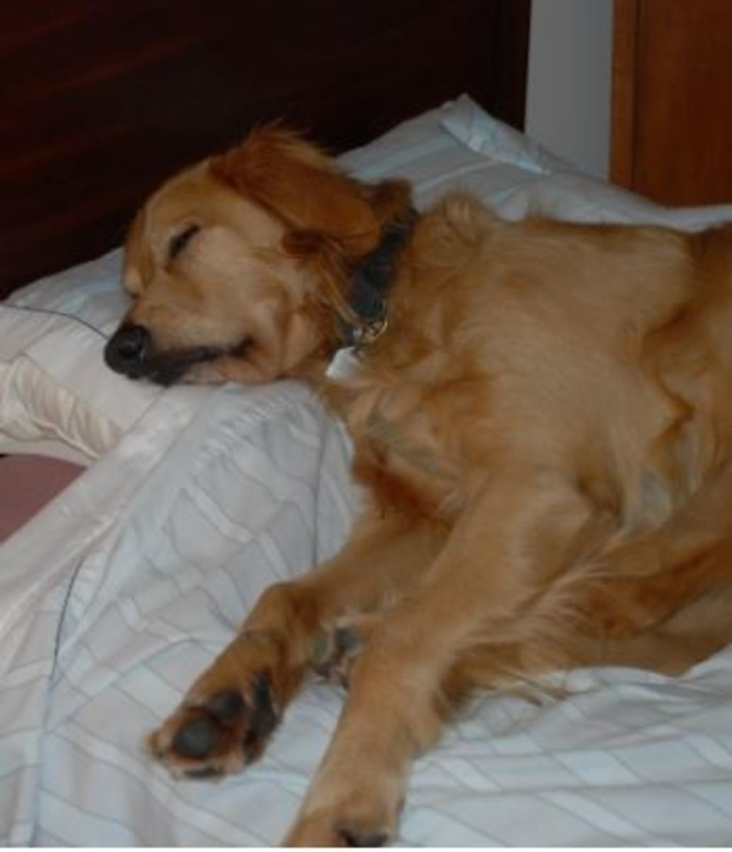 dog-sleeping-disorders