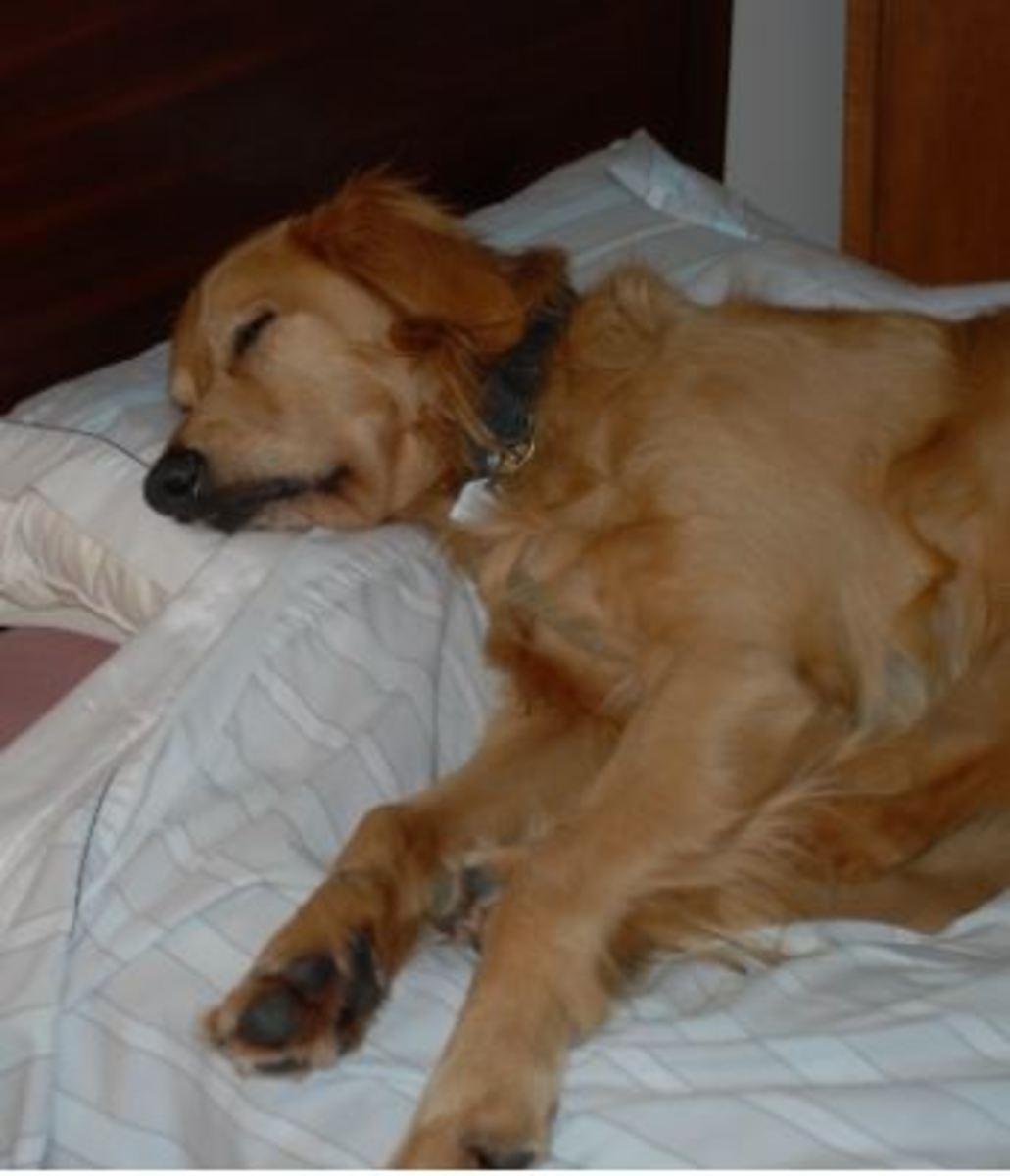dog-sleeping-disorders