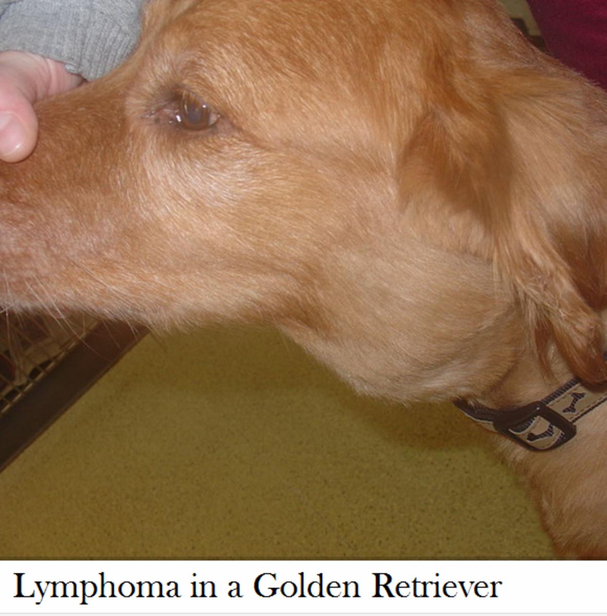 dog enlarged lymph node neck