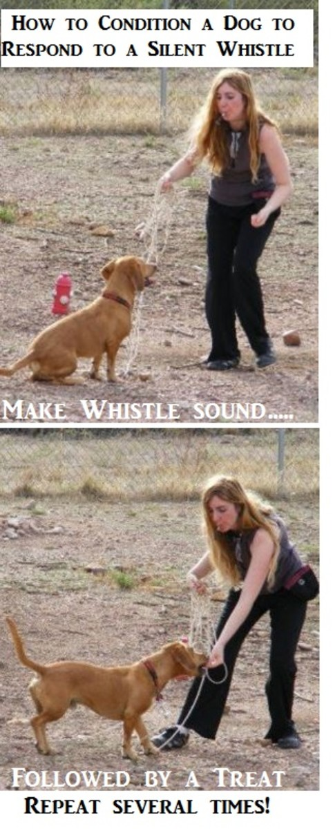 whistle-training-a-dog