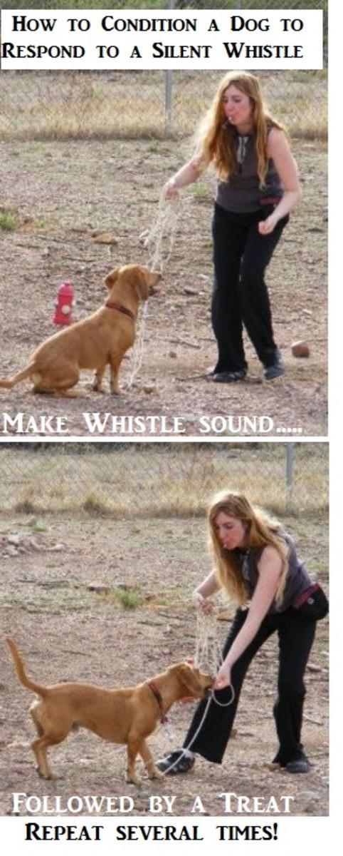 whistle-training-a-dog