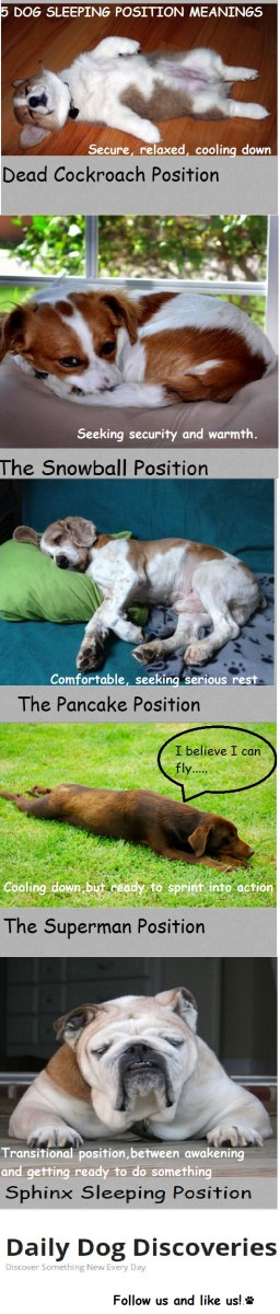 dog sleeping position meanings