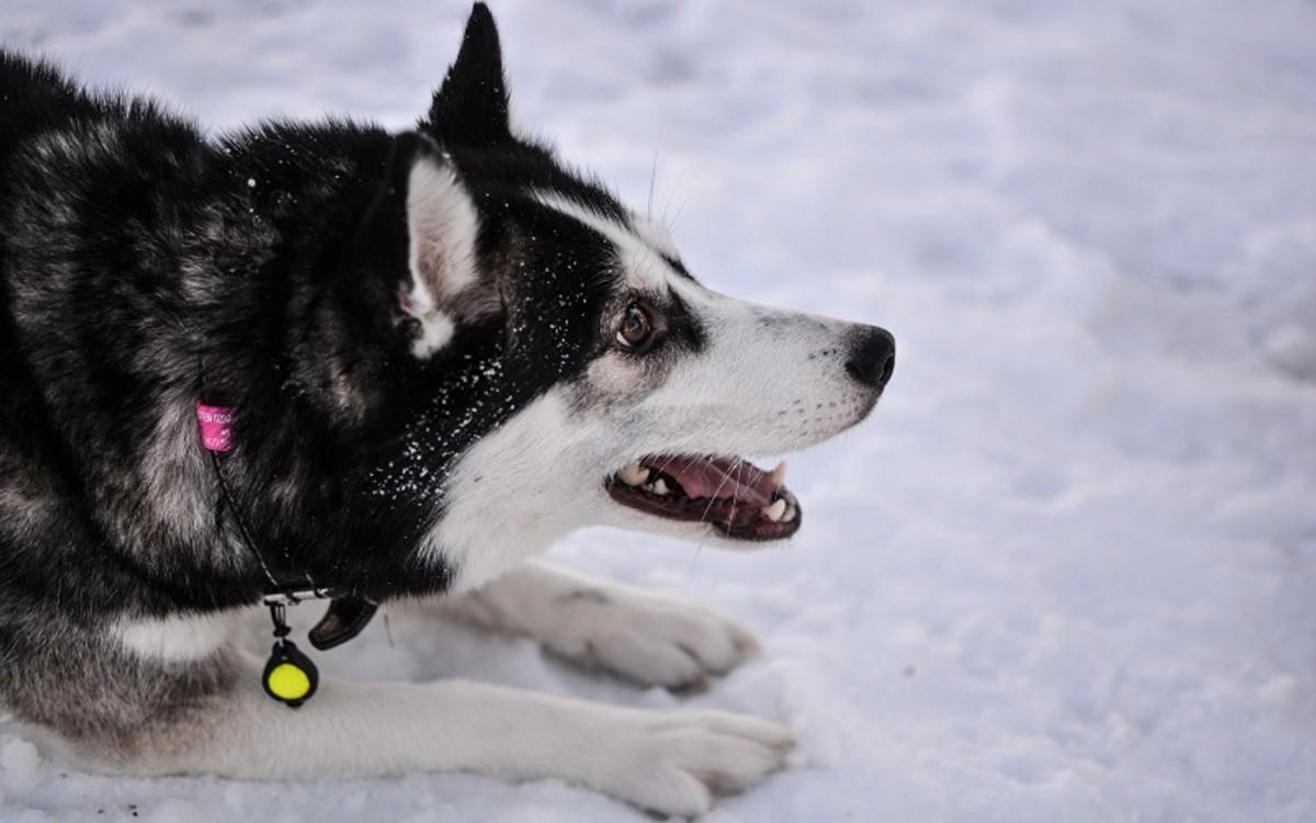 Ways Dogs Stay Warm