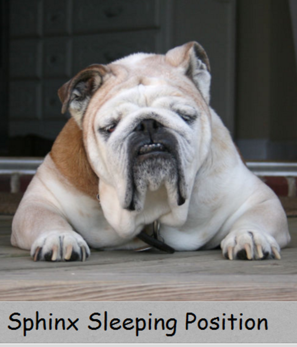 dog sleeping position