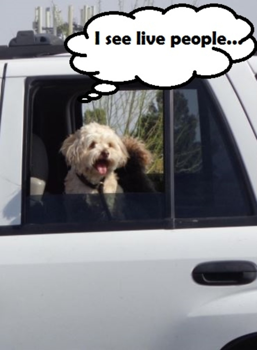 dog-anxious-in-the-car