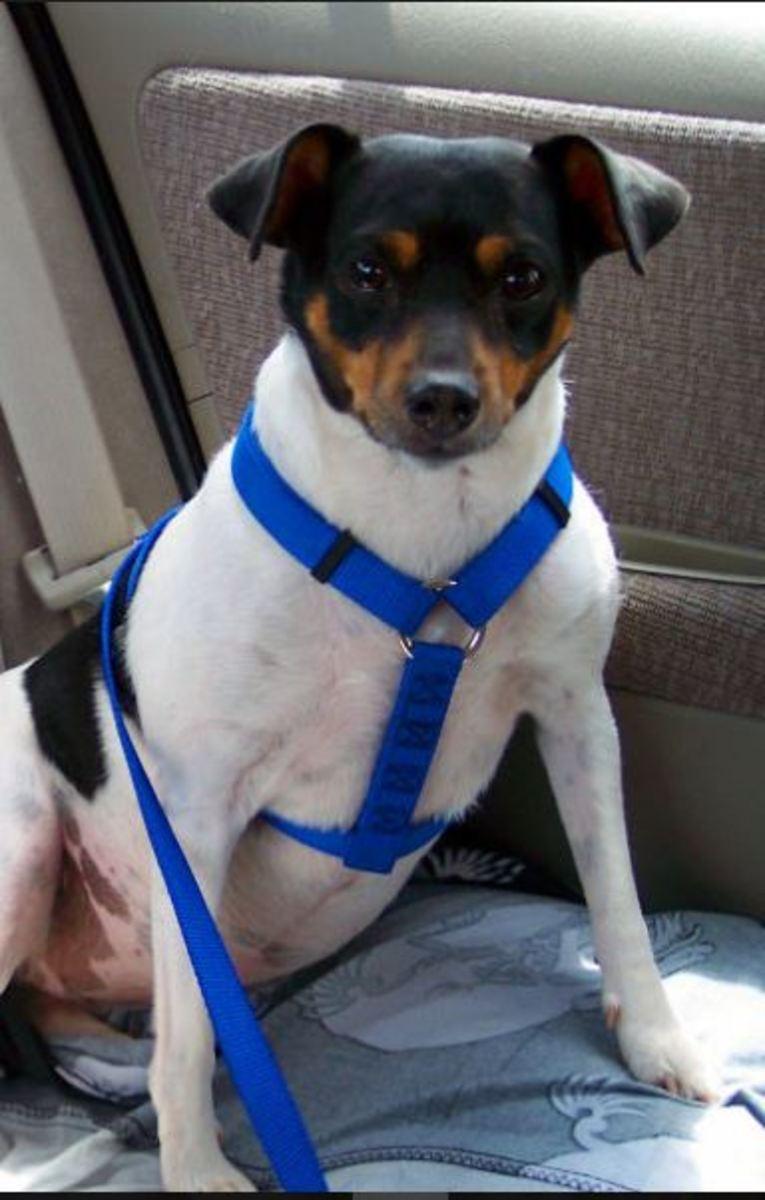 dog-harness-car-seat-belt