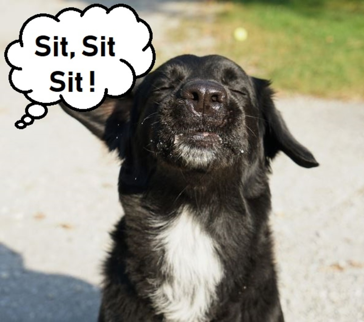 Repeating commands in dog training