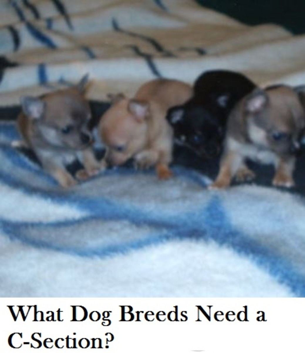 dog-breeds-c-section