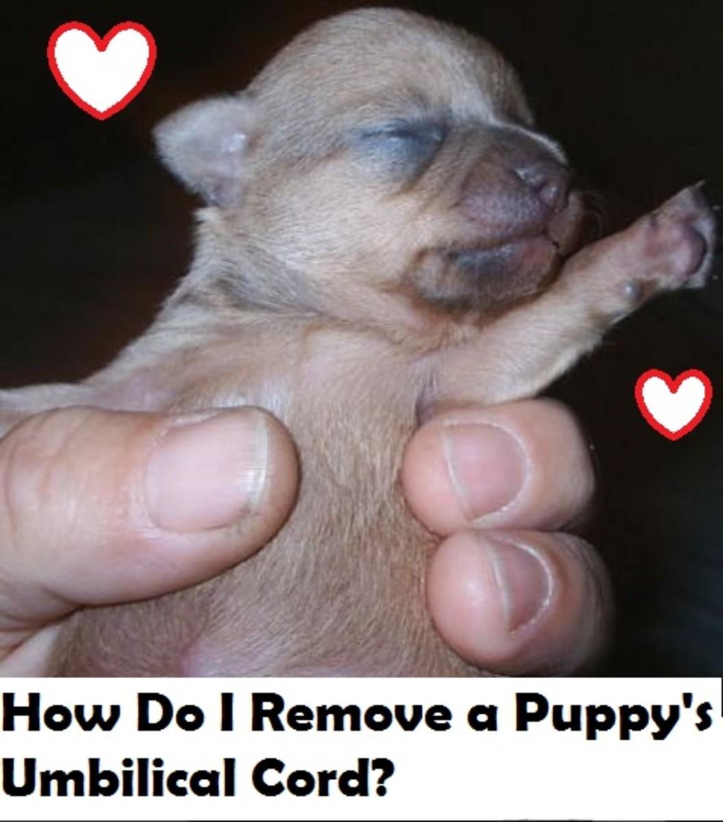 puppy-umbilical-cord