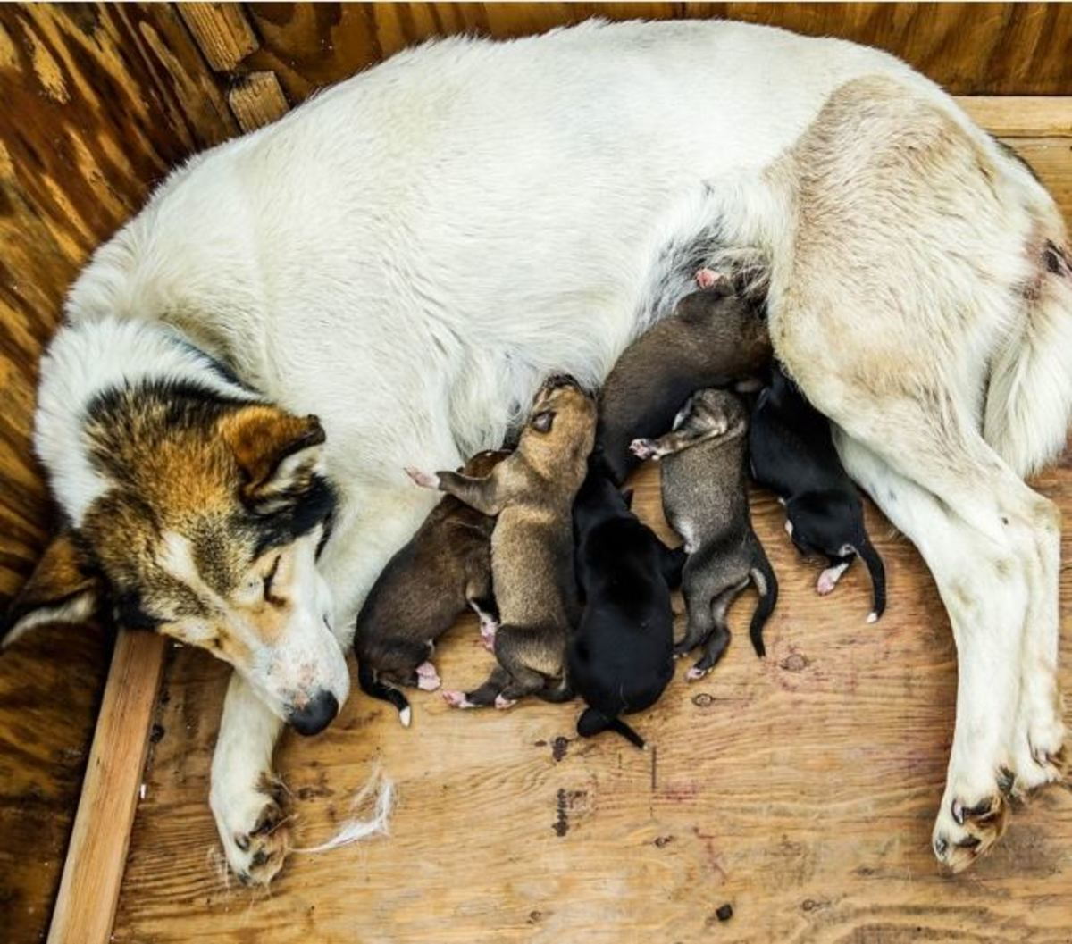 How to help mother dog produce milk?