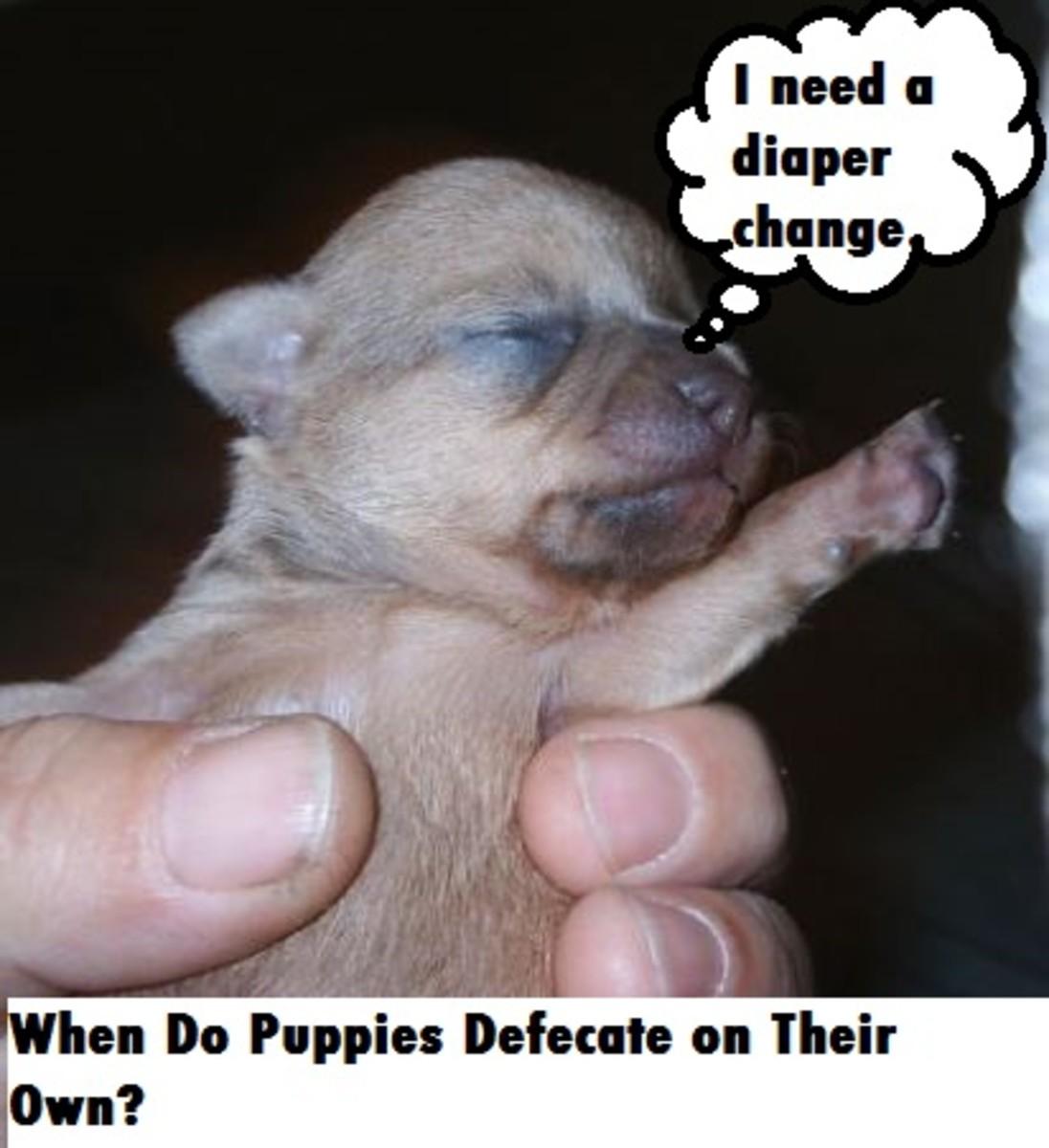 puppy defecate