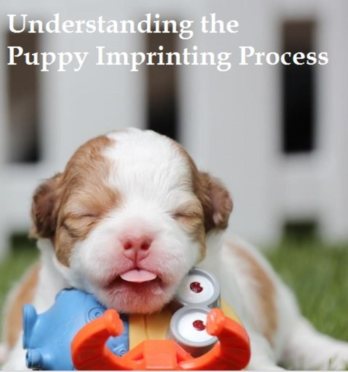 puppy imprinting