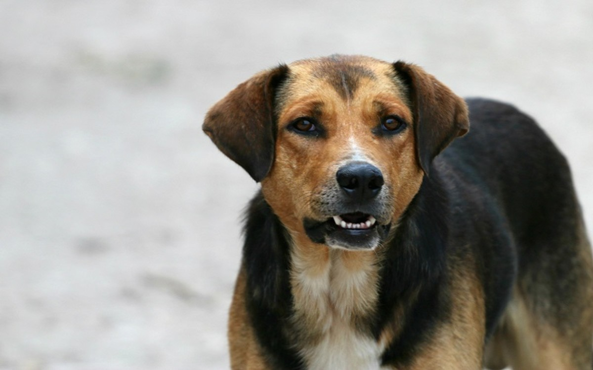 Deworm a Pregnant Dog