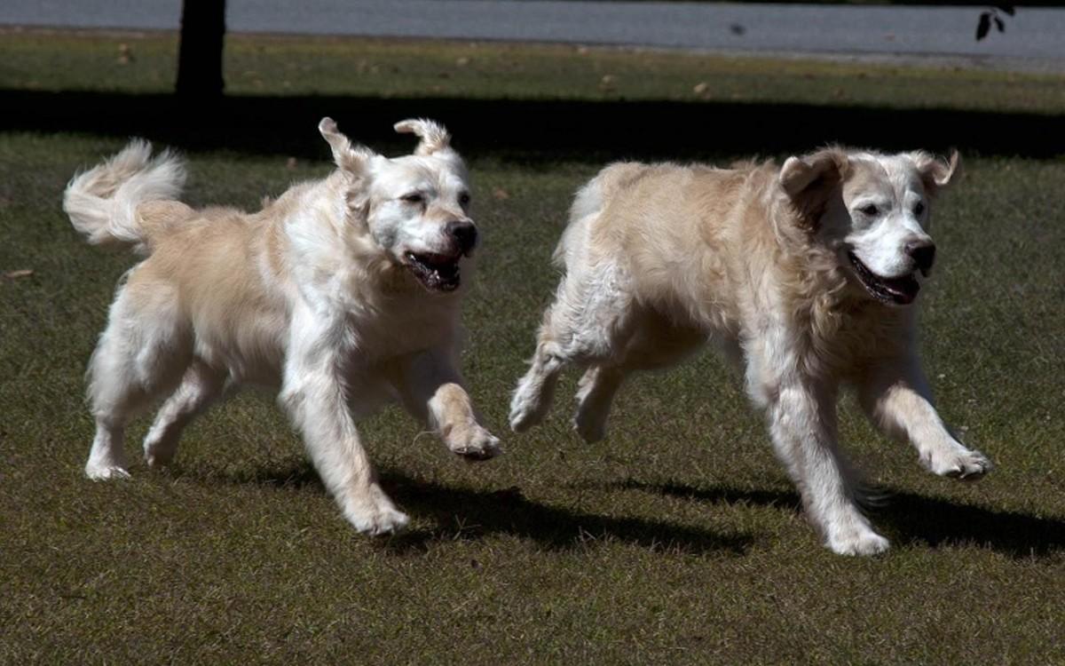 When Should My Female Dog Mate?