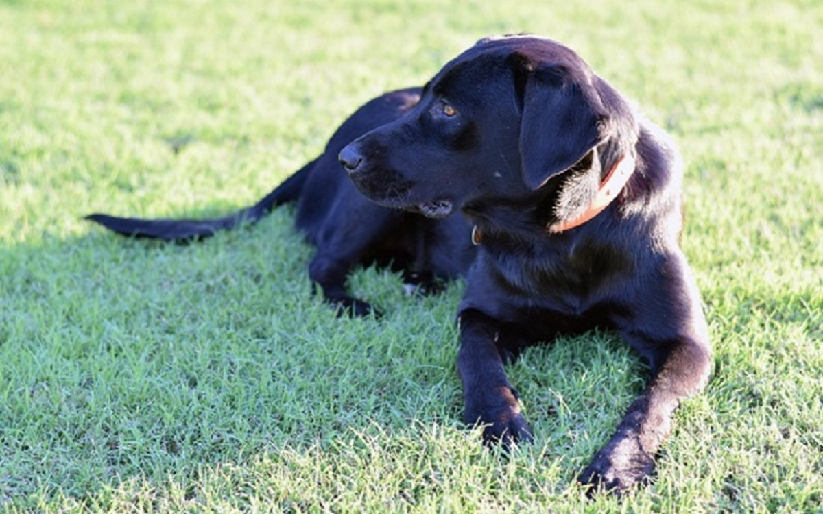 Causes for Dogs Vomiting Undigested Food