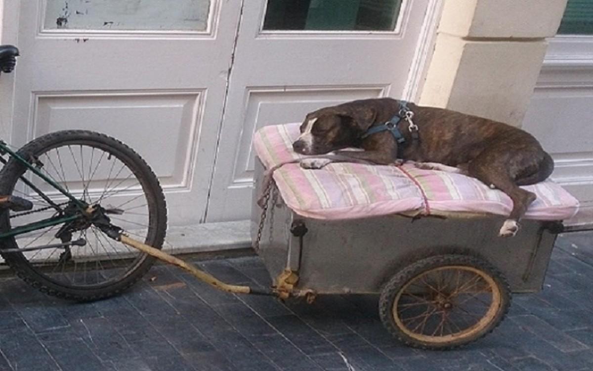 Dog Motion Sickness Causes