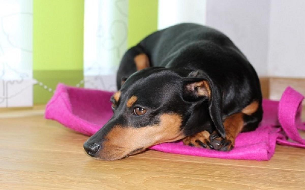 Dog Fasting